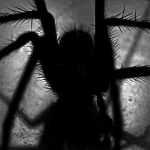 fobia animal